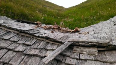 Überreste eines Schafes