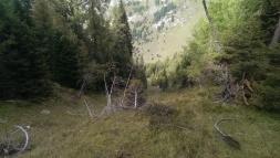 Waldschneise